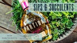 Graphic and photo of a tequila bottle and succulent plants to promote sips and succulents
